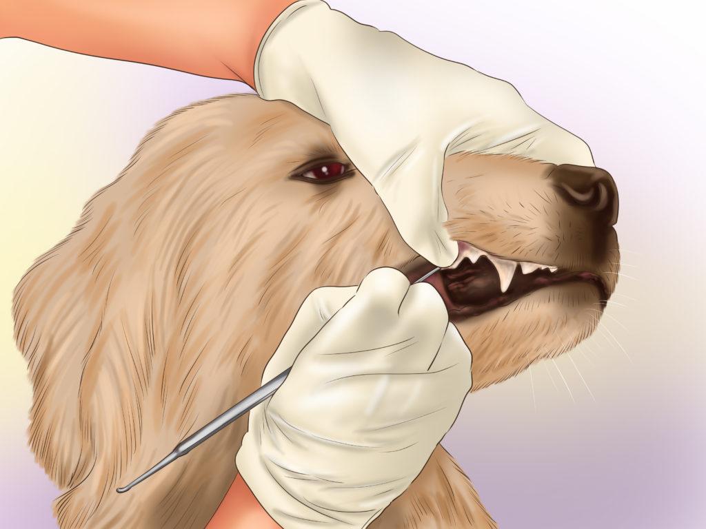 чистка зубов собакам